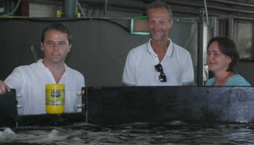 Her er forskerteamet bak Chile-hjelpen: Øyvind Knutsen, Finn Are Michelsen og Ingrid Ellingsen i Sintef Ocean. (Foto: Sintef)