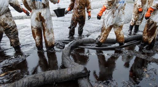 Kan en svamp være redningen ved oljelekkasjer?