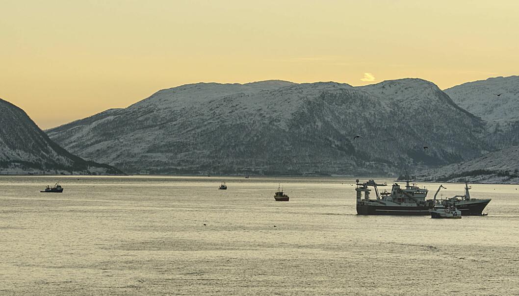 I 2009 leverte norske fartøy vel én million tonn norsk vårgytende sild til en verdi av 2,5 milliarder norske kroner. I 2016 leverte de bare 200 000 tonn til 1,5 milliarder kroner. Derfor er det viktig for havforskere å finne ut av hva som er bærekraftig forvaltning. Bildet er fra sildefiske på Kaldfjorden utenfor Tromsø.  (Foto: Gunnar Sætra, Havforskningsinstituttet)