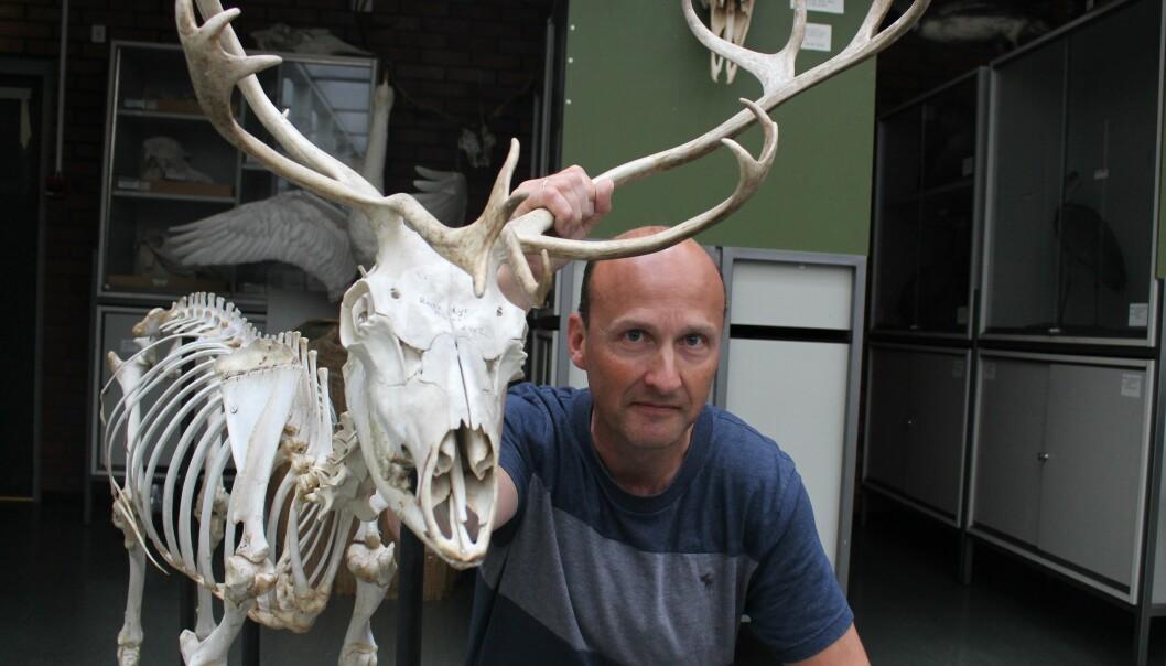 Professor Atle Mysterud er bekymret for at skrantesyken kan ha spredd seg til Hardangervidda. (Foto: Bjarne Røsjø)