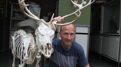 Frykter skrantesyke-mareritt på Hardangervidda