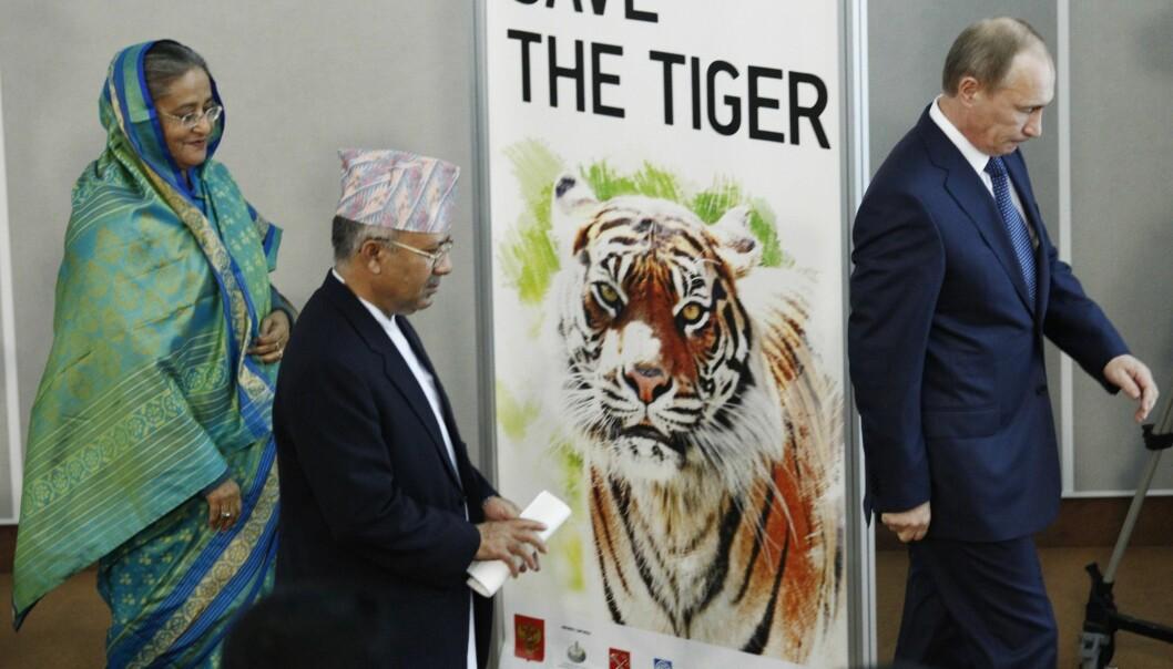 Samtidig som WWF har lagt fram en dyster rapport om at stadig flere arter forsvinner fra kloden, har Kina opphevet forbudet mot handel av produkter laget av truede tigre og neshorn. Bildet er fra en internasjonal tigerkonferanse i St. Petersburg i november 2010. (Arkivfoto: Dmitrij Lovetskij / AP / NTB scanpix)