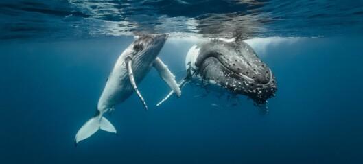 Hva sier hvalunger til moren sin?