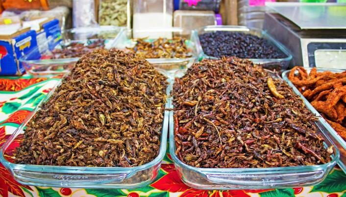 Dette er et marked i Mexico City. Der kan du kjøpe deilige, stekte skorpioner,maur og gresshopper. (Foto: Shutterstock / NTB scanpix)