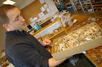 Her holder Sean Denham en kasse med flere beinrester fra de 31 skjelettene som var begravet under domkirken i Stavanger. (Foto: Bjørnar Kjensli)