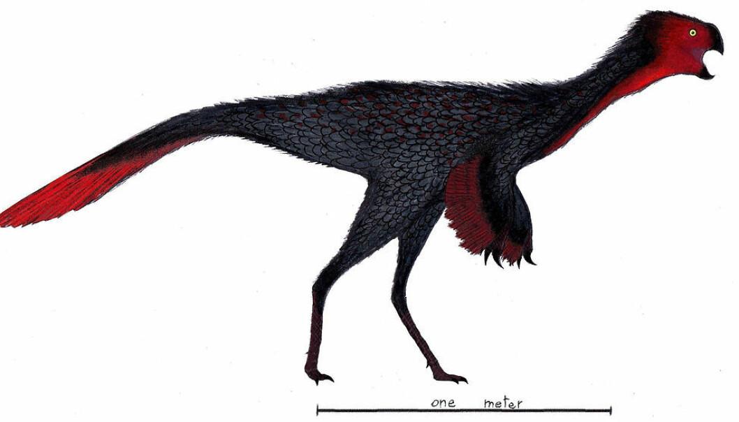 En variant av dinosauren Heyuannia, slik en kunstner ser den for seg. (Bilde: Danny Cicchetti/CC BY-SA 3.0)