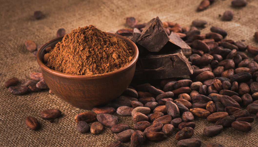 Ny studie tyder på at kakao ble dyrket 1500 år tidligere enn forskerne tidligere har trodd. I Mesoamerika har kakao både blitt brukt til drikke og som valuta, forteller dansk forsker. (Foto: iprachenko / Shutterstock / NTB scanpix)