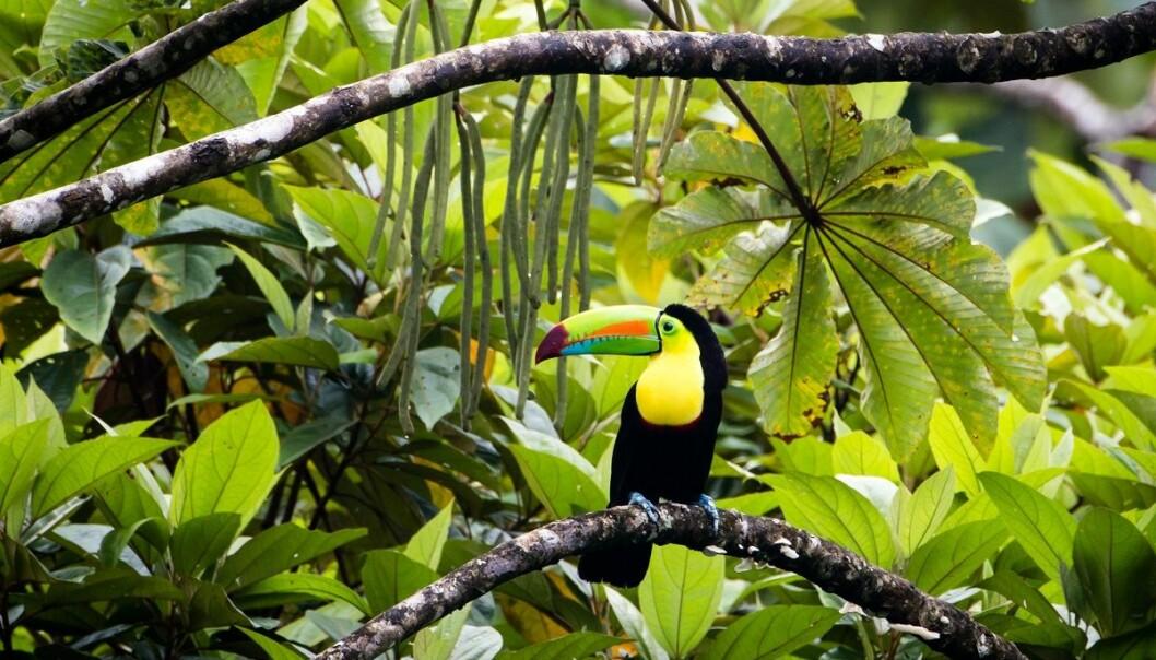 Selv om regnskogen er frodig, er den ikke direkte gjestmild mot mennesker. Det finnes like mange livsfarlige trusler som det finnes mat. (Foto: DeLoyd Huenink, Shutterstock, NTB scanpix)