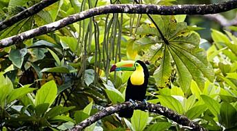 Mennesker har tuklet med regnskogen i minst 45 000 år