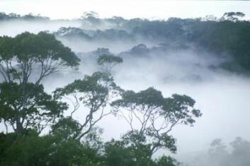 Morgendis i Regnskogen, Amazonas. (Foto: William Laurance)