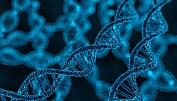 Uvitende har mindre tro på genteknologi