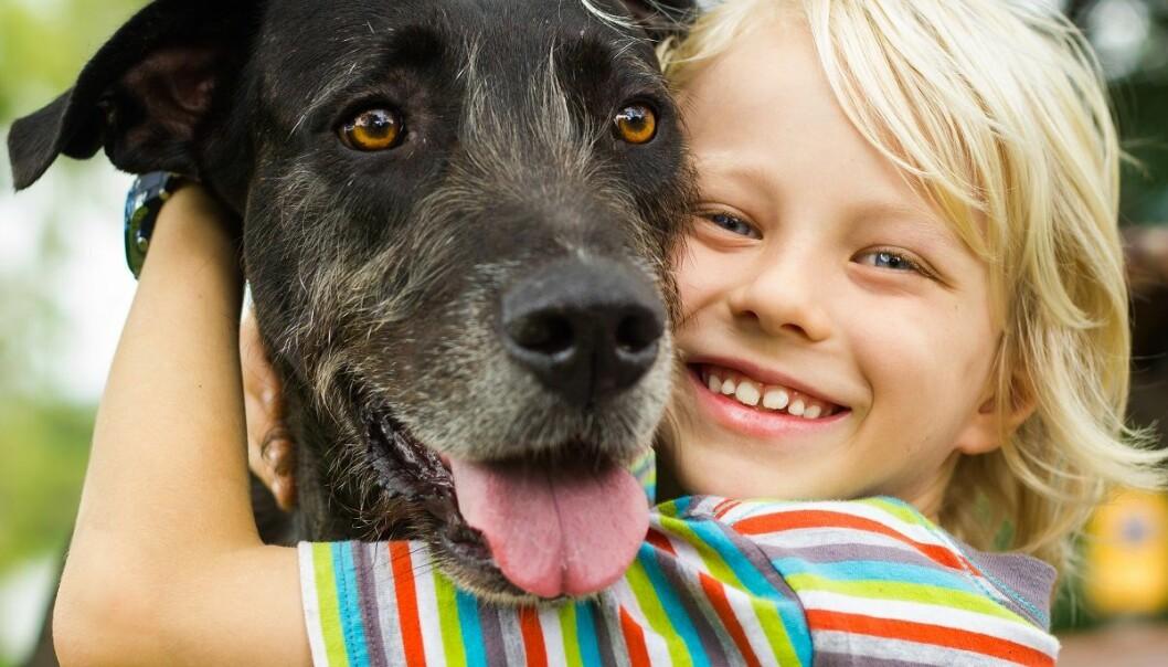 – Vi fant ingen bevis for at barn fra familier med hunder og katter har det bedre psykisk eller fysisk, sier Layla Parast, en av forskerne bak studien, i en pressemelding. (Illustrasjonsfoto: Melle V, Shutterstock, NTB scanpix)