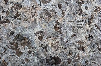 Størkningsbergarten gabbro består av det lyse mineralet plagioklas, mørk grå pyroksen og rustfarget olivin. De avlange krystallene på flere cm størrelse er typisk for en bergart som er krystallisert i dypet av jordskorpen. (Foto: Ane K. Engvik)