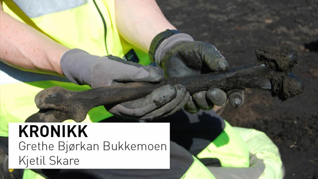 Dette lårbeinet ble funnet under utgravinger i våtmarksområdet Starene i Hedmark. Undersøkelsene i etterkant ga helt ny kunnskap om rituelle nedleggelser og hva vi kan forvente å finne i slike myrområder. (Foto: Grethe Bjørkan Bukkemoen / Kulturhistorisk museum)