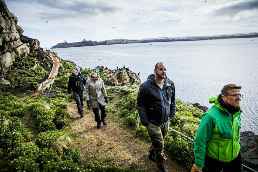 Stadig flere reiser til Hornøya i Finnmark for å få oppleve det rike fuglelivet der. (Foto: Christian Roth Christensen / Visitnorway.com)