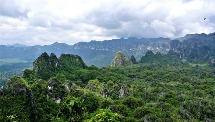 I disse kalksteinsformasjonene på Borneo finnes det huler. (Bilde: Pindi Setiawan)