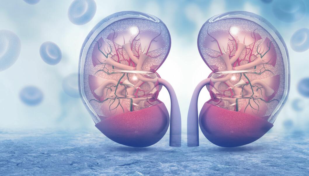 Økning i antall donasjoner og transplantasjoner