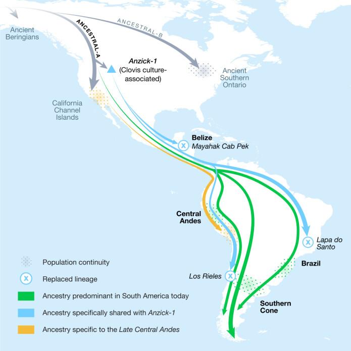 Kartet viser hvordan befolkningene beveget seg sørover i Amerika. (Illustrasjon: Michelle O'Reilly, Cell)