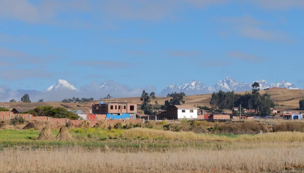 En moderne bosetning på høylandet i Peru, rundt 3000 meter over havet. Forfedrene utviklet evnen til å leve på stivelsesrike poteter. (Foto: Eivind Torgersen)