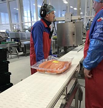 Mye av laksefilet som sendes ut av landet, pakkes i såkalt Big batch, det vil si pakninger med 10–12 kilo fileter. Det er ofte plass til to slike bigbatchpakker i hver transportkasse. (Foto: Nofima)