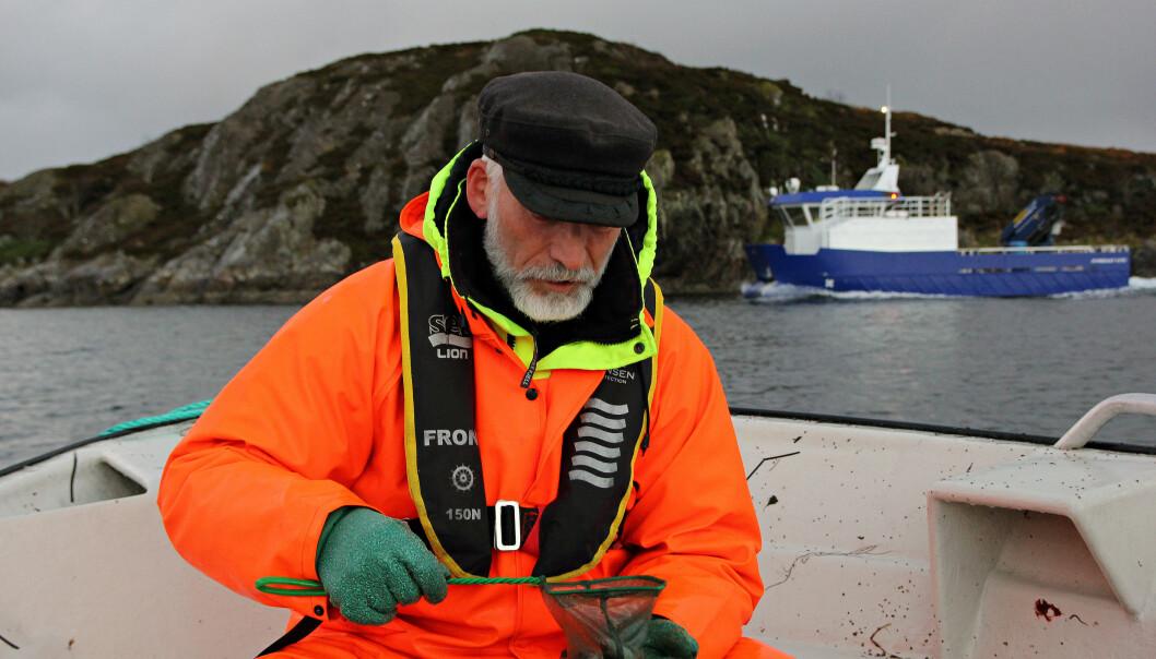 Forsker Terje van der Meeren er ute i felt for å overvåke torsken ved Smøla. Det har han og kollegene ved Havforskningsinstituttet gjort siden 2015, og skal fortsette fram til 2020. (Foto: Anders Jakbosen/Havforskningsinstituttet)