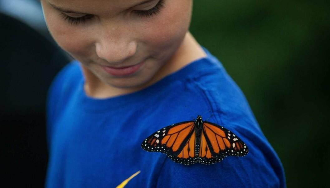 Denne monark-sommerfuglen satte seg på 8 år gamle Dante Long sin skulder under et stunt i september, hvor 50 monarker ble sluppet fri utenfor det amerikanske parlamentet for å spre bevissthet om populasjonens tilbakegang. (Foto: AFP/ Drew Angerer).