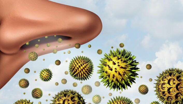 Pollen inn, pollen (og snørr) ut med et smell. (Illustrasjon: Colourbox)