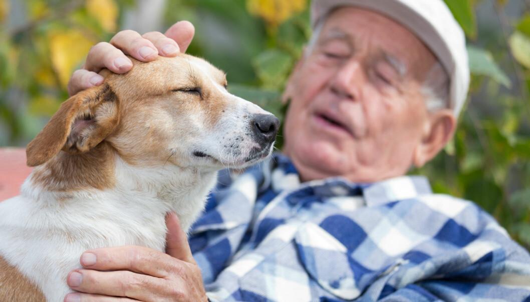 Forskerne mener ikke at den nye studien betyr at absolutt alle som blir eldre bør skaffe seg en hund. Det er tross alt mye som skal til for å gi en firbeint turkamerat et godt og verdig liv. (Foto: Budimir Jevtic / Shutterstock / NTB scanpix)