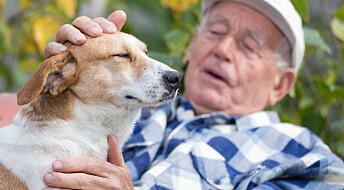 Hund er mer effektiv enn treningsstudio når du er gammel
