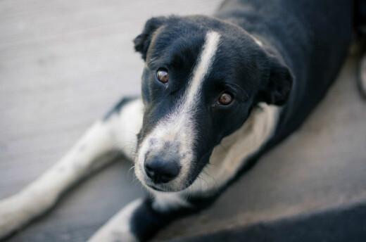 Hvordan finne kvalitetssikret hundeforskning