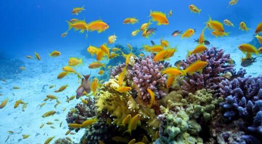 Oljesøl får fisk til å oppføre seg som fulle folk