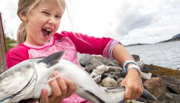 Noen steder langs kysten er det veldig mye fisk. Nå vet forskere hvorfor.