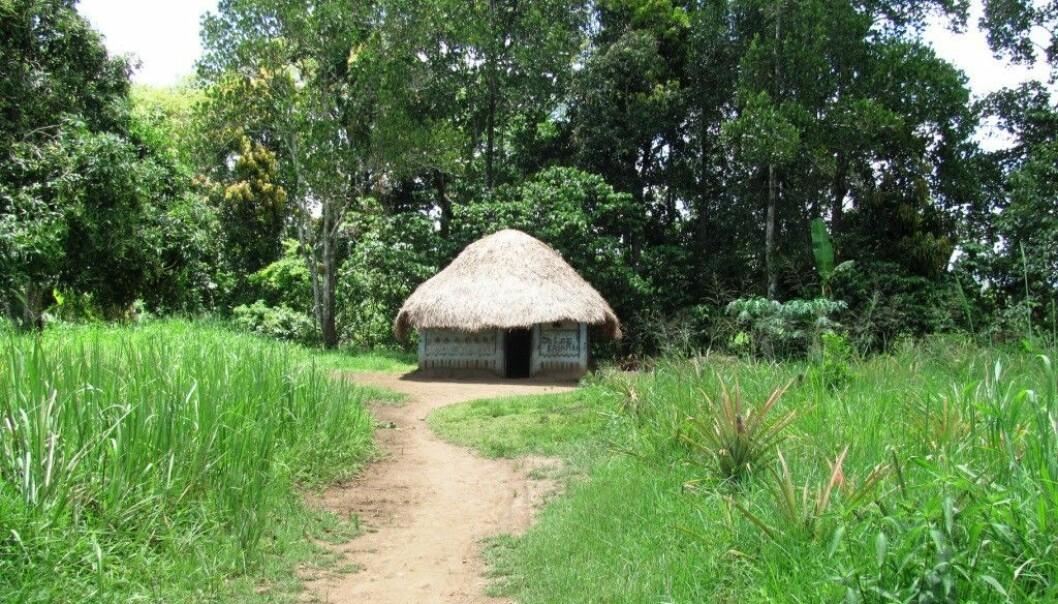 Et hus i skogkanten i Kibaale-distriktet i Uganda. Fra en av landsbyene der forskere testet om det lønner seg å betale skogeiere for å la være å hugge ned trærne. (Foto: Megan Kearns)