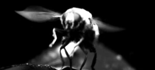 Se hvordan flua klarer seg uten balanse-køller