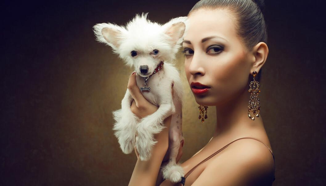 Da vi hadde slått oss til ro med at hunden ble vår beste venn to ulike steder i verden, kom det selvfølgelig en ny studie som mener at ulvetemmingen bare skjedde én gang. (Illustrasjonsfoto: Augustino, Shutterstock / NTB scanpix)