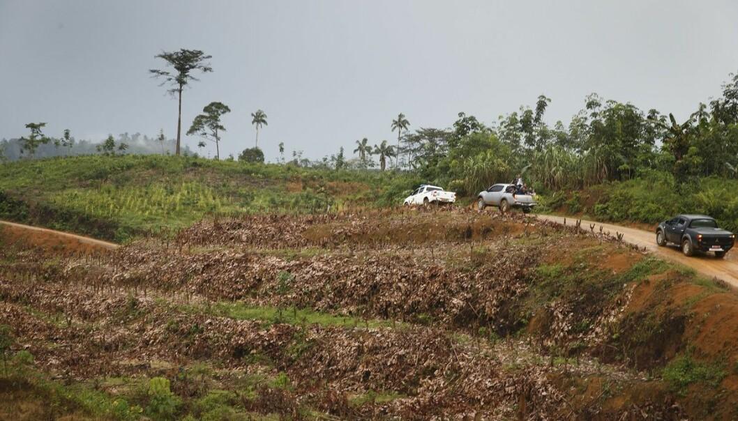 Et avskoget område på øya Sumatra i Indonesia. (Foto: Heiko Junge, NTB scanpix)