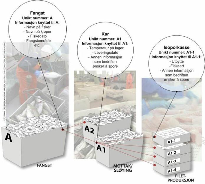 Illustrasjon på hvordan informasjonen kan spores hos et fiskebruk fra fangst, mottak/sløying av fisk og filetproduksjon (Foto: Frank Gregersen. Illustratør: Oddvar Dahl / Nofima).