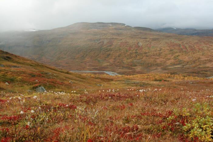 Norske nasjonalparker er viktige områder for friluftsliv, og i mange av nasjonalparkene er friluftsliv en del av formålet med vernet. Her fra Børgefjell nasjonalpark. (Foto: Marianne Evju)