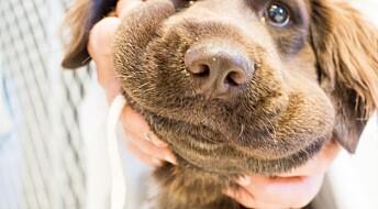 Hva gjør du når hunden blir bitt av huggorm?