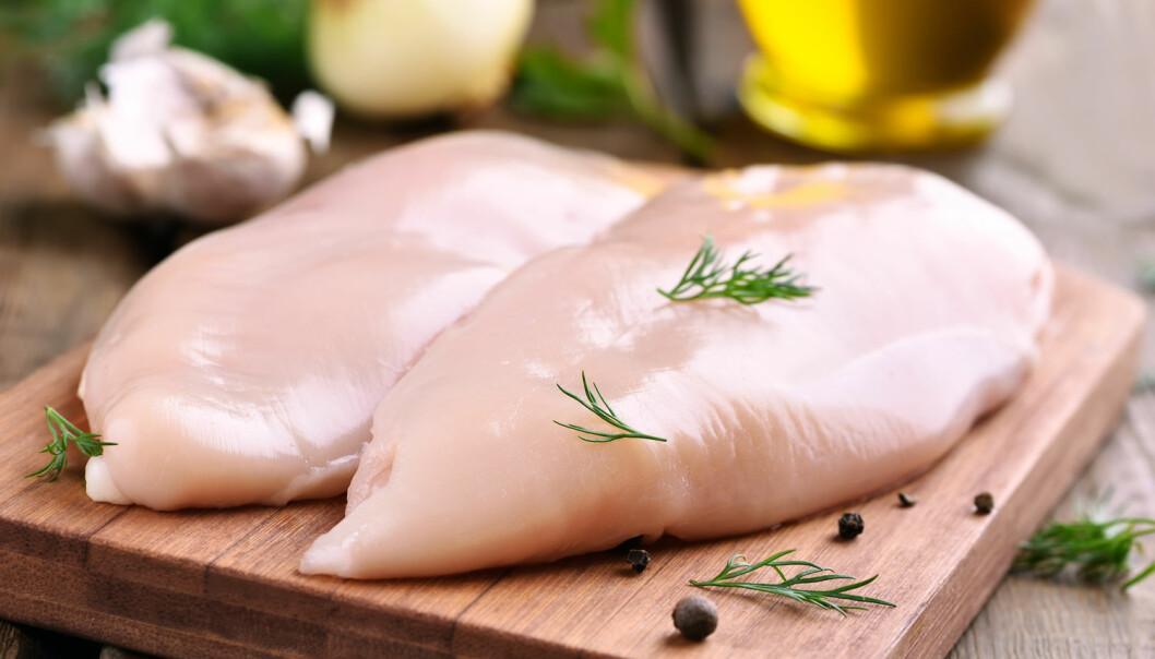 Til vanlig ser kyllingbrystene saftige og delikate ut. Men hvis de om er rammet av muskelsyndromet wooden breast, kan det gå ut over både mørhet, smak og utseende.  (Foto: Shutterstock / NTB scanpix)