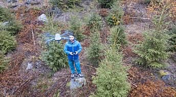 Ny kunnskap og teknologi kan redde skog fra råte