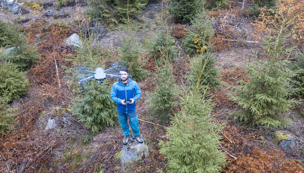 Bruk av droner til kartlegging av hvordan rotråte sprer seg, kan være til stor hjelp for skogeiere. Her er det NIBIO-forsker Stefano Puliti som styrer en drone for filming over et hogstfelt. (Foto Erling Fløistad, NIBIO)