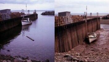 I Fundybukta i Canada er det stor forskjell på høyvann og lavvann. (Foto: Tttrung/Wikimedia Creative Commons)