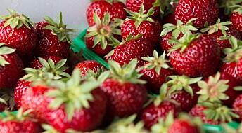 Spør en forsker: Derfor bør du vaske jordbærene