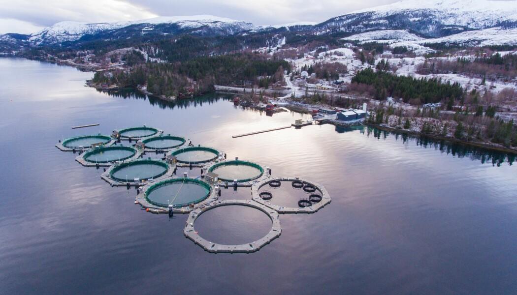 Mange av målingene i det nye forskningsprosjektet ble gjort ved dette oppdrettanlegget i Sæterosen i Brønnøy kommune (AkvaFuture AS). Fisken holder til i ti lukkede innhegninger, merder, som er lett å få øye på fra lufta. (Foto: Arve Nilsen)
