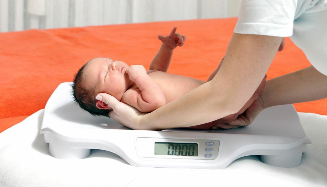 Store babyer blir mer intelligente resten av livet, viser ny dansk forskning. Babyer som veier mellom 3,5 og 4 kilo ved fødselen, har gjennomsnittlig den høyeste intelligensen. (Foto: Beneda Miroslav / Shutterstock / NTB scanpix)