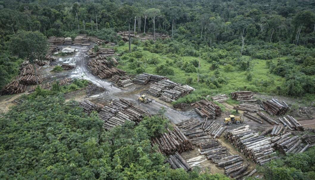 Bildet viser ulovlig avskoging i Pirititi i Amazonas i mai i år. (Foto: Felipe Werneck/Ibama via AP / NTB scanpix)