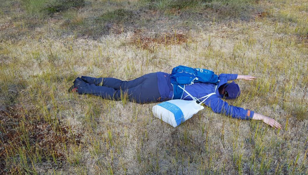En forkjølet feltarbeider kunne ta seg en hvil i en nydelig seng av inntørkede torvmoser. Vanligvis er vannstanden i disse såkalte mykmattene så høye at man går rundt dem, ikke i dem. (Foto: Magni Olsen Kyrkjeeide)