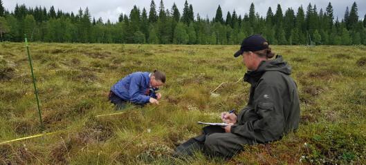 Med drone og lupe sjekker vi om restaurering av myr virker