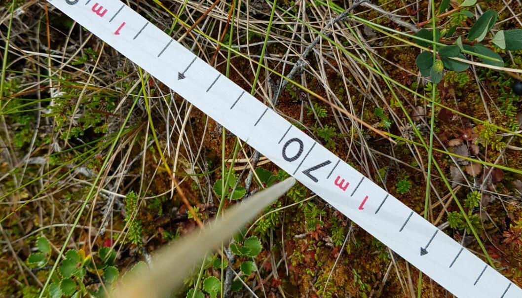 Ved registrering av vegetasjon er det mange ulike måter å gjøre det på. Dersom man velger å gjøre det langs en linje, kan man registrere alle arter som treffer en pinne med en såkalt pinpoint-analyse. (Foto: Magni Olsen Kyrkjeeide.)
